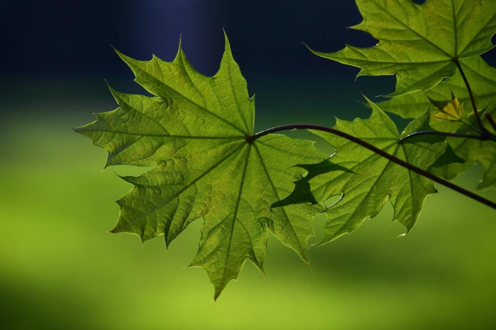 leaf-3332373_1920