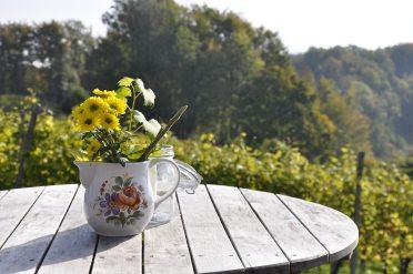 beautiful-bloom-blooming-269220