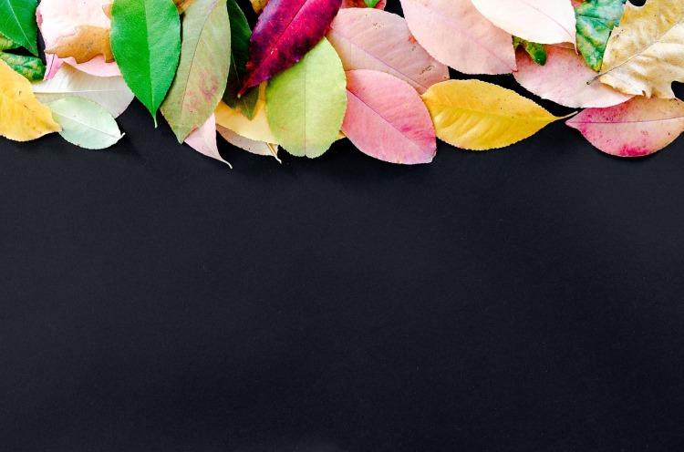autumn-2902576_1280